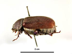 Lateral view