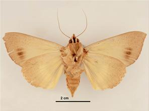 Ventral view - female