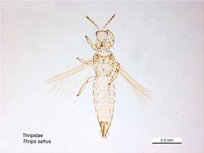 ventral image - Female