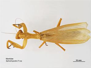 Dorsal Image - Female
