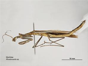 Lateral Image - Male