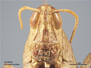Head front image - Female