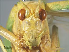 Head front image - male