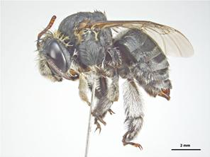 Lateral Image - Female