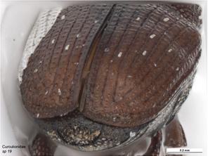 Posterior Image
